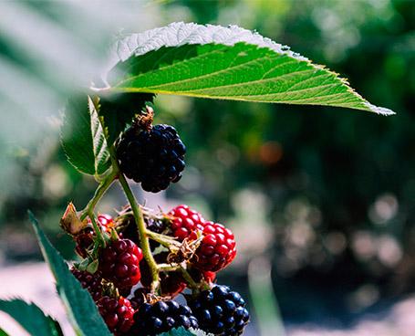 Predilección por la botánica | Obsession Gin