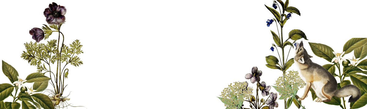 Header | Obsession Gin