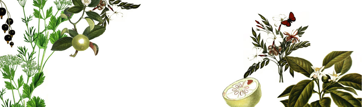 Plantas Classic Header | Obsession Gin