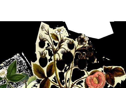 Plantas Purple Header | Obsession Red